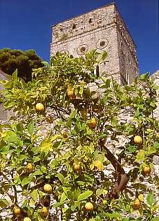 Zitronenbaum in der Villa Rufolo (April)