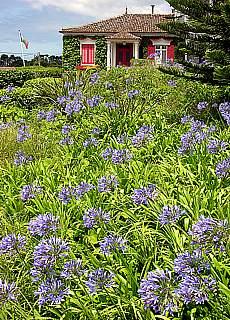 Haus in Capelo auf Faial (Juni)
