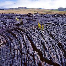 Erstarrte Lava am Mauna Kea (Februar)