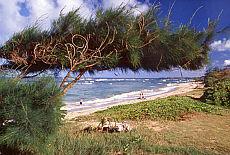 Lydgate Park auf Kauai (März)