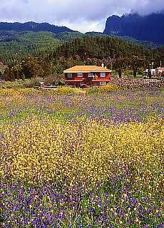 Blumenwiese bei El Paso (Juni)