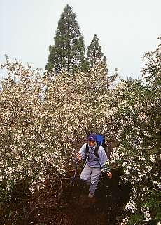 Aufstieg zum Pico Birigoyo (November)