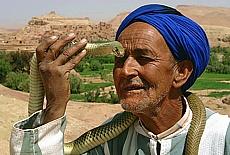 Schlangenbeschwörer in Tineghir (Mai)