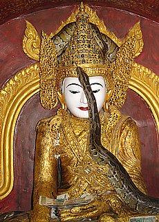Pythons im Schlangentempel von Mandalay (Dezember)