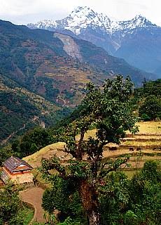 Annapurna Süd von Gurung (Februar)