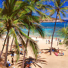Palmenstrand an der Hanauma Bay auf Oahu (Mai)