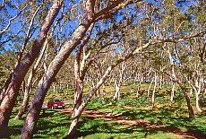 Tamarindenwald am Piton Maïdo (April)