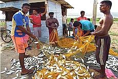 Fischer in Negombo (März)
