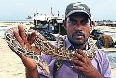 Singhalesischer Schlangenbeschwörer mit Python (Februar)