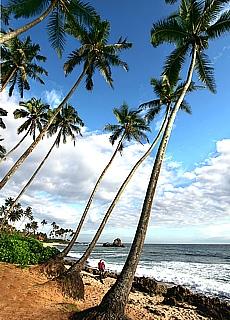 Palmenstrand bei Weligama (November)