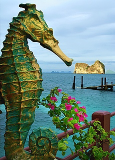 Seepferdchen auf der Insel Ko Ngai (Januar)