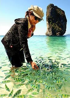 Bunte Fische auf der Insel Ko Poda (Mai)