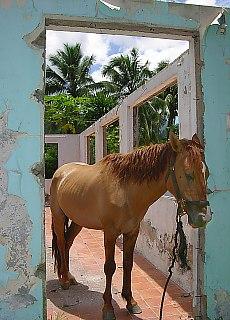 Es steht ein Pferd auf dem Flur (Februar)