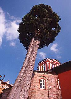 Kloster Philotheou (Juni)
