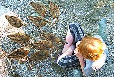Enten füttern auf der Fraueninsel (Mai)
