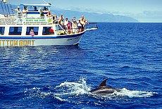 Delfine vor Los Gigantos (April)