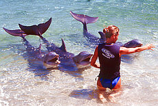 Delfinshow im Hilton Waikoloa Resort auf Big Island (April)
