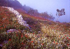 Frühling in Monte St. Angelo (März)