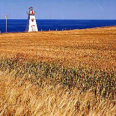 Leuchtturm im Weizenfeld auf Prinz Eduard Island (Juni)
