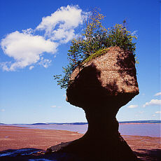 Flowerpot Rocks bei Ebbe in der Fundy Bay (Mai)
