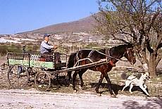 Im Land der schönen Pferde (Juni)