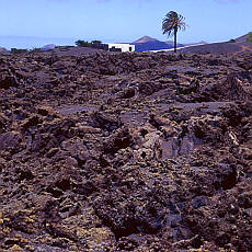 Vulkanerde auf Lanzarote (April)