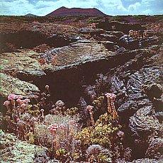 Vulkanerde auf Lanzarote (Februar)