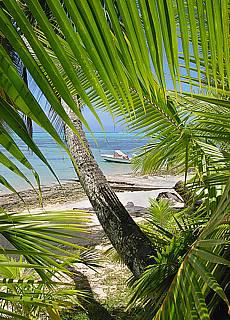 Südsee pur am Strand nahe dem Hibiscus Hotel auf Moorea (Mai)