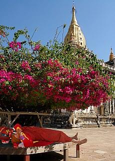 Mönch beim Nickerchen im Ananda Tempel in Bagan (Juni)