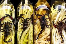 Eingelegte Skorpione als Delikatesse (Mai)