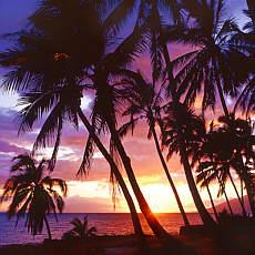 Sonnenuntergang unter Palmen (September)