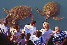 Meeresschildkrötenfarm Ferme Corail bei Saint Leu (Juli)