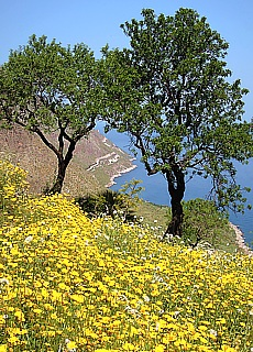 Wandern im Naturpark Lo Zingaro (Mai)