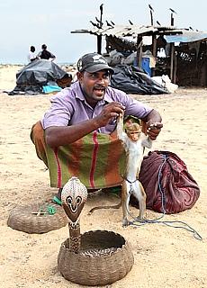 Singhalesischer Schlangenbeschwörer mit Kobra und Affe (Mai)
