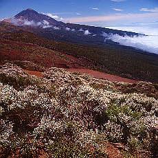 Teide, höchster Berg Spaniens (März)