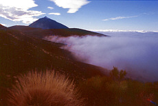 Teide von Laguna aus gesehen (November)
